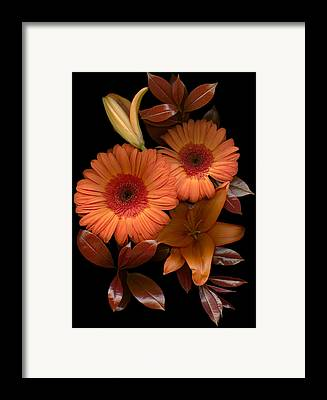 Day Lilies Framed Prints