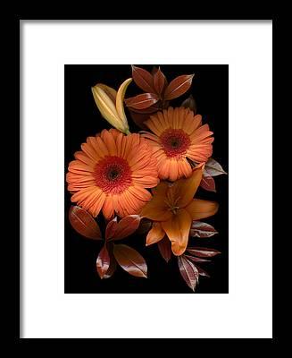 Day Lily Framed Prints