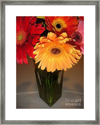 Gerbera Daisies - Vased Framed Print by Lucyna A M Green