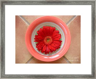 Gerbera Daisy - Bowled On Tile Framed Print by Lucyna A M Green