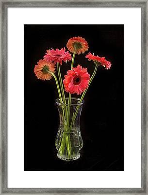 Gerbera Daisy Bouquet Framed Print by Jean Noren