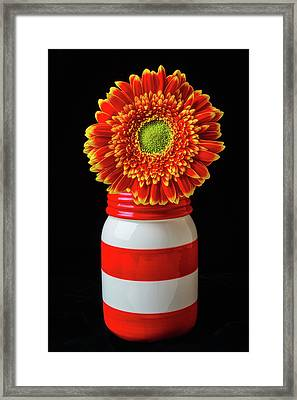 Gerbera Daisy In Jar Framed Print