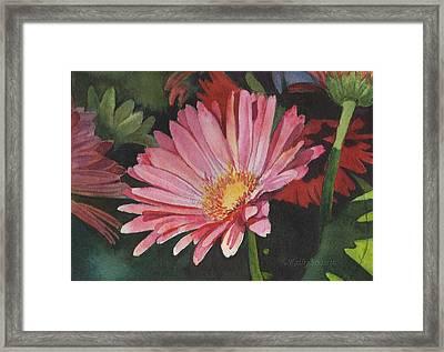 Gerbera Daisy Framed Print by Kathy Nesseth