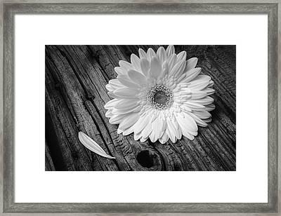 Gerbera Daisy On Old Wood Framed Print