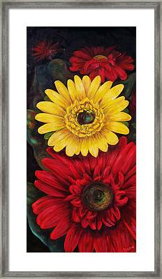 Gerbera Framed Print by Dana Redfern
