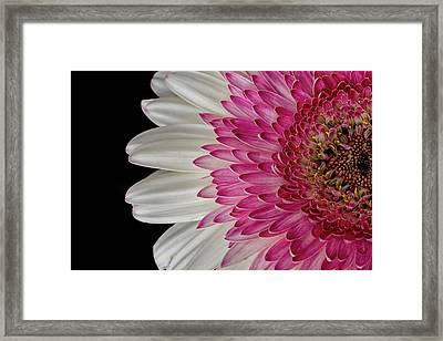 Gerbera Flower Framed Print