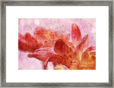 Gerberie - 010dt Framed Print by Variance Collections