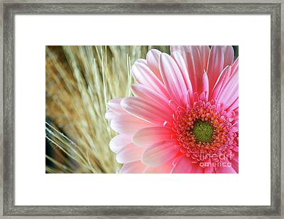 Framed Print featuring the photograph Gerberlicious by Traci Cottingham