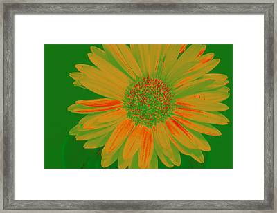 Framed Print featuring the photograph Gerbia Daisy Sabattier by Bill Barber