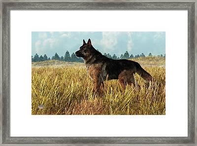 German Shepherd Framed Print by Daniel Eskridge