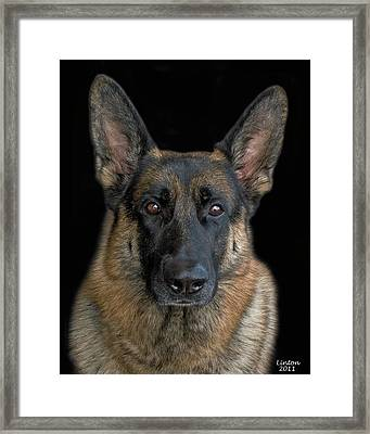 German Shepherd Dog 2 Framed Print by Larry Linton