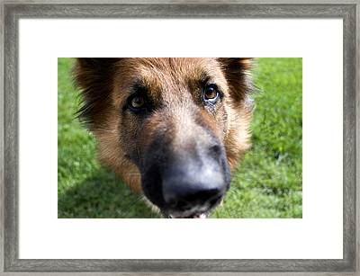 German Shepherd Dog Framed Print by Fabrizio Troiani