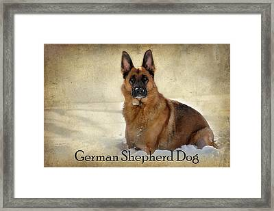 German Shepherd Dog In Winter - Textured Framed Print by Angie Tirado