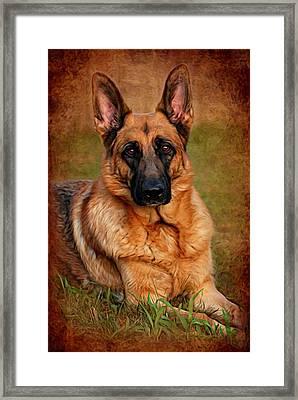 German Shepherd Dog Portrait  Framed Print by Angie Tirado