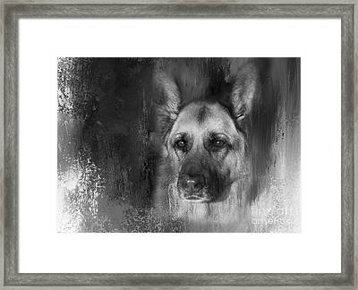 German Shepherd In Black And White Framed Print