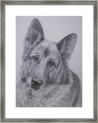 German Shepherd Framed Print by Keran Sunaski Gilmore