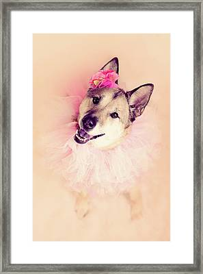German Shepherd Mix Dog Dressed As Ballerina Framed Print by R. Nelson