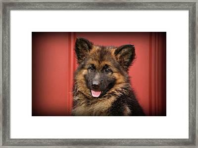 German Shepherd Puppy - Queena Framed Print by Sandy Keeton