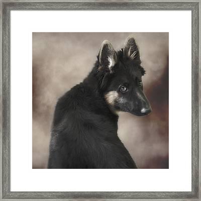 German Shepherd Puppy 1 Framed Print