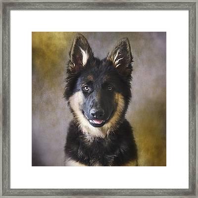 German Shepherd Puppy Portrait Framed Print by Wolf Shadow  Photography