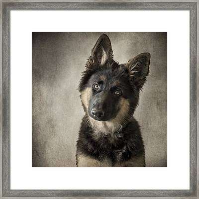 German Shepherd Puppy Framed Print by Wolf Shadow  Photography