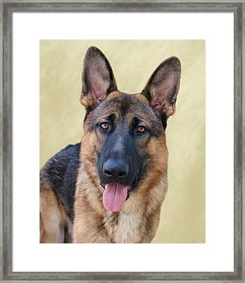 German Shepherd Framed Print by Sandy Keeton