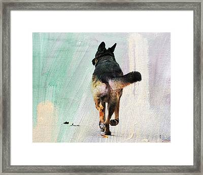 German Shepherd Taking A Walk Framed Print