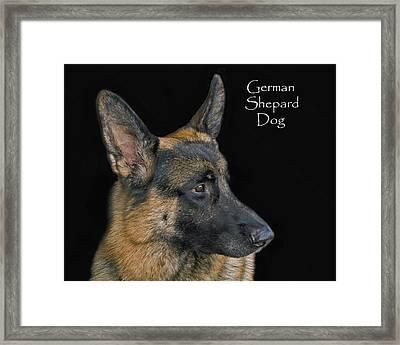 German Shhepard Dog Framed Print by Larry Linton