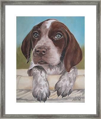 German Shorhaired Pointer Puppy Framed Print