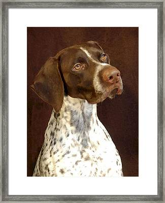 German Shorthaired Pointer 235 Framed Print by Larry Matthews