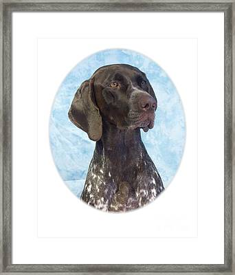 German Shorthaired Pointer 664 Framed Print by Larry Matthews