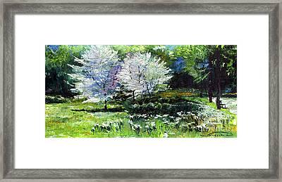 Germany Baden-baden Spring 2 Framed Print by Yuriy  Shevchuk