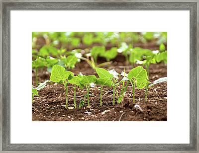 Framed Print featuring the photograph New Sprouts In The Promised Land by Yoel Koskas