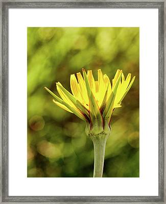 Germination Framed Print by Tom Druin