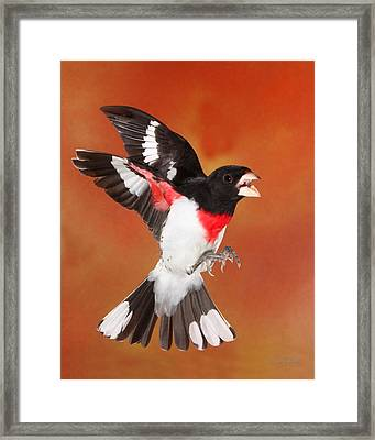 Framed Print featuring the photograph Get Away From Her by Gerry Sibell