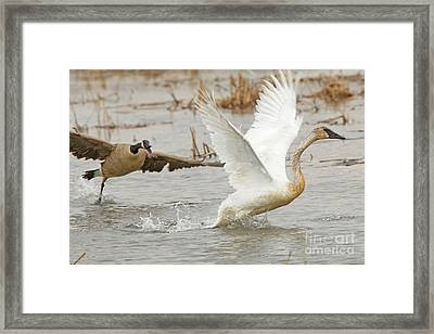 Get Away From My Nest Framed Print by Natural Focal Point Photography