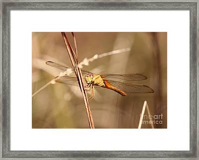 Get My Good Side Framed Print by Carol Groenen