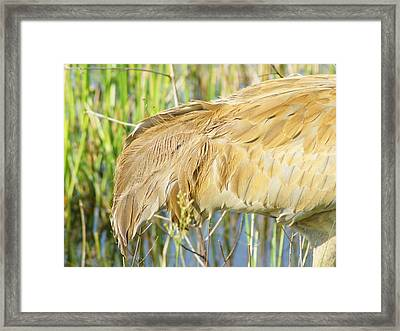 Framed Print featuring the photograph Get Some Tail by Lynda Dawson-Youngclaus