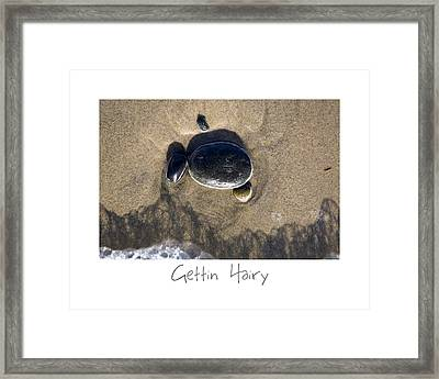 Gettin Hairy Framed Print by Peter Tellone