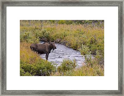 Getting A Cool Drink Framed Print by Tim Grams