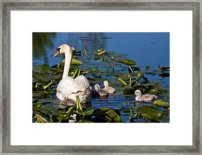 Getting Close To Mom Framed Print by James Marvin Phelps