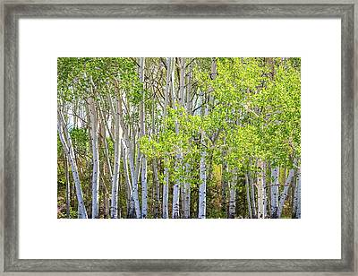 Getting Lost In The Wilderness Framed Print by James BO Insogna