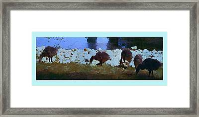 Getting My Ducks In A Row Framed Print by Mindy Newman