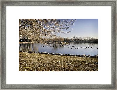 Getting Ready To Fly South Framed Print