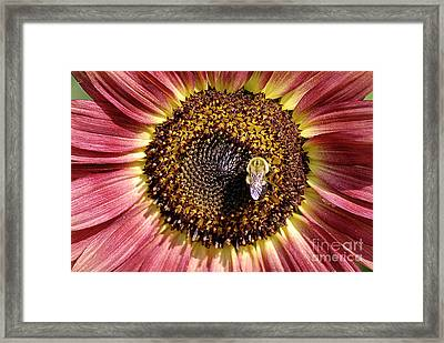 Getting Some Sun Framed Print by Randy Bodkins