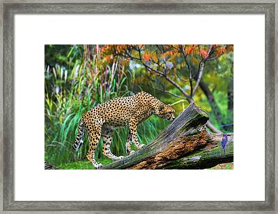 Getting The Scent Framed Print by Keith Lovejoy
