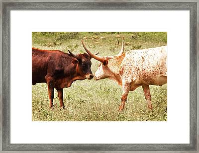 Getting To Know You Framed Print by Tamyra Ayles