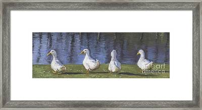 Getting Your Ducks In A Row Framed Print by Terri  Meyer