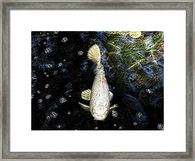 Ghost Fish Framed Print
