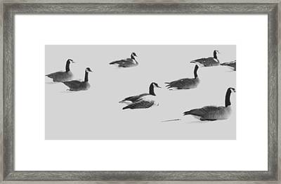 Ghost Geese Over Beverly Hills Framed Print by Todd Sherlock